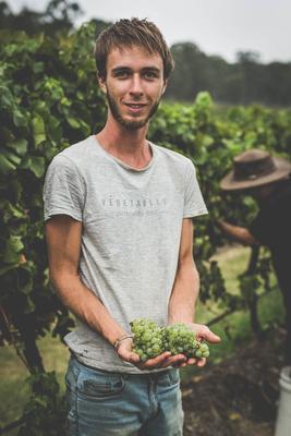 Three Ps Photography- Tintilla Estate white grape Harvest 2